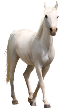 horse-png